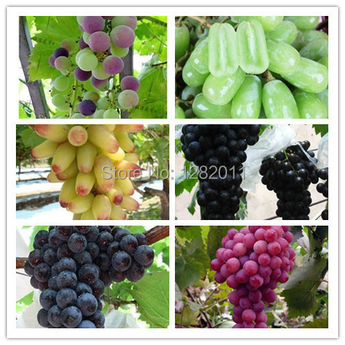 Free shipping 6 kinds of 60 grape seed planting potted fruit garden seeds(China (Mainland))