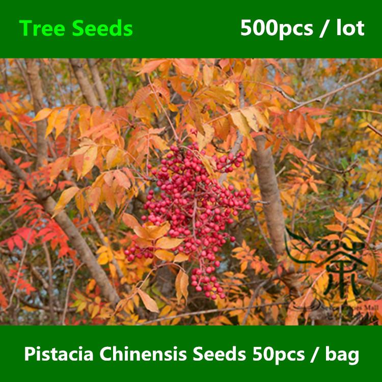 online kopen wholesale pistache boom uit china pistache boom groothandel. Black Bedroom Furniture Sets. Home Design Ideas