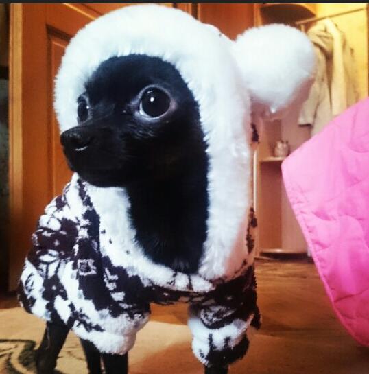 ( Cinza e preto ) cão macacão de lã Polar para Pet roupas para o inverno quente com capuz promoção ( S / M / L / XL / XXL )