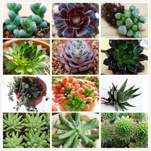 30seeds/pack Best Price Best Promotion 21 Kinds Succulents Seeds Plants Potted Flower Seeds Office Home Balcony Decorative Hot(China (Mainland))