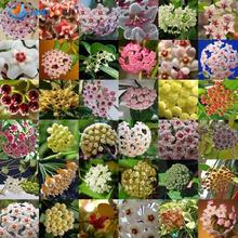 50 Pcs / Bag, Hoya  Seeds, Diy Potted Plants, Indoor / Outdoor Pot Seed Germination Rate Of 95% Mixed Colors
