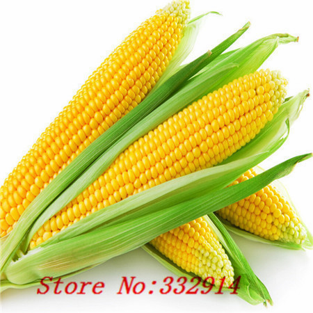 Hot Sale 20 8 kinds of corn Rare Seeds Sweet Corn Fresh Organic Heirloom Vegetable Seed Fruit Corn BLUE GIANT C STRAWBERRY POPCO(China (Mainland))