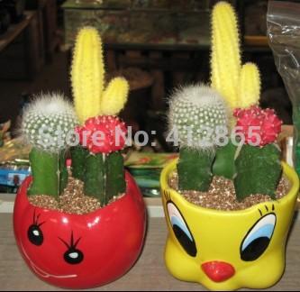 mini jardin de cactus promotion achetez des mini jardin de cactus promotionnels sur aliexpress. Black Bedroom Furniture Sets. Home Design Ideas