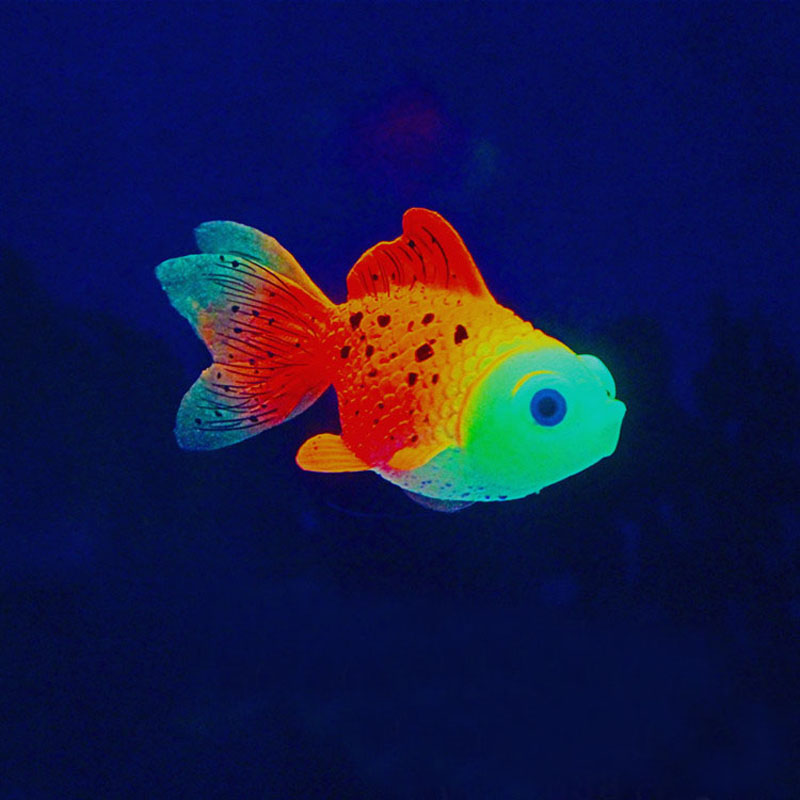 Goldfish aquarium fish promotion shop for promotional for Poisson rouge aquarium 20l