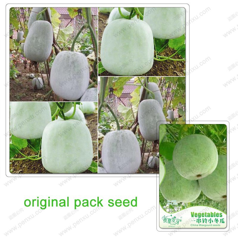 Original Pack 25 Seeds / Pack,Hot courtyard Chinese green vegetables winter melon seeds, Chinese wax gourd, large seeds(China (Mainland))