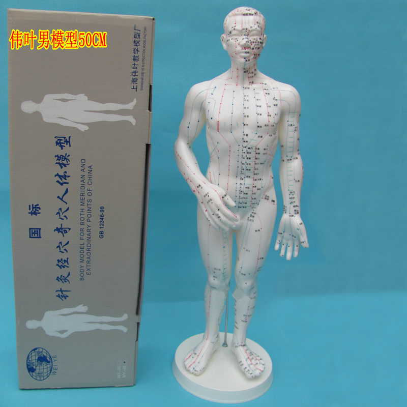 Silicone Acupuncture Model Male Men Acupoint Human Body Meridian Mannequin(China (Mainland))