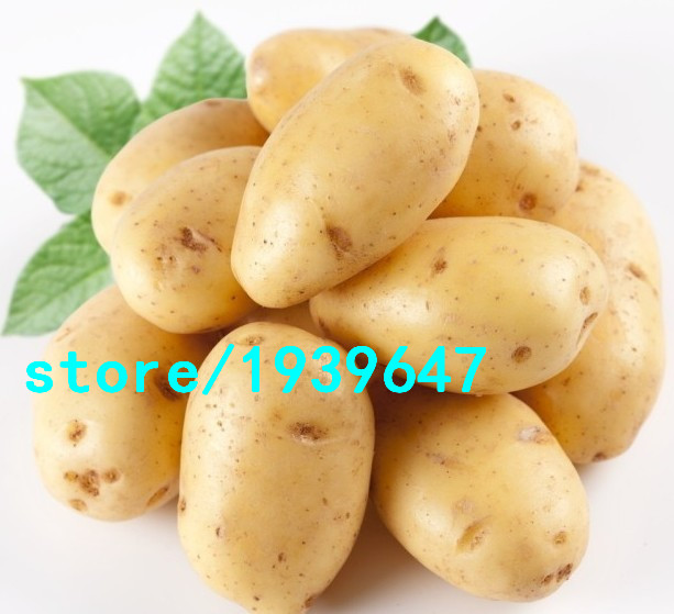 Potato Yukon Gold Flavorful Yellow-skinned and Yellow-fleshed Potatoes Fruit and Vegetable Seeds For Home Garden 100PCS + Gift(China (Mainland))