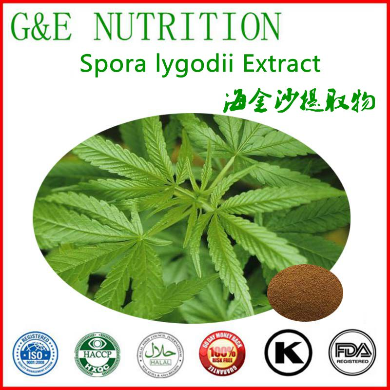 GMP Certified Manufacturer Supply Spora lygodii Extract  with free shipping 1000g