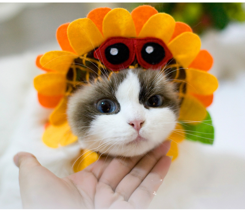 Cute Pets Cats Cat Costumes Sweet Pet Hat
