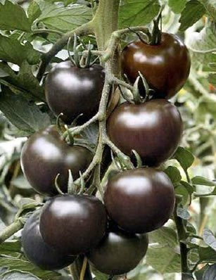 Mix Mini $5 25pcs Rare Fruit Black Cherry Tomato Seeds, Original Package Mini Tomato Seeds Four Seasons Bonsai Fruit Seeds(China (Mainland))
