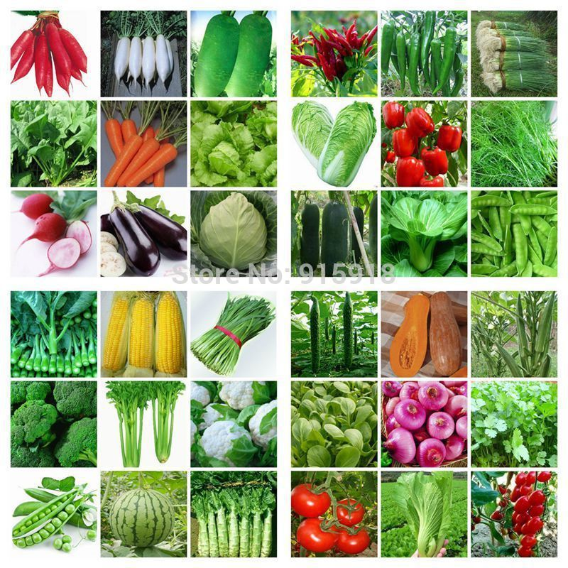36 Packs Varieties 8000 Pcs Seeds Emergency Survival Heirloom Vegetable Garden  Seeds NON GMO Organic 2014 Hot ! Home U0026 Garden