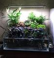 Dimmable Ultra Bight Led fish tank aquario lamp Designed for Aquatic plants Aquarium accessories acuarismo 50cm