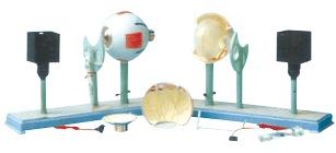 Functional model of human eye imaging instrument 45*14*27cm