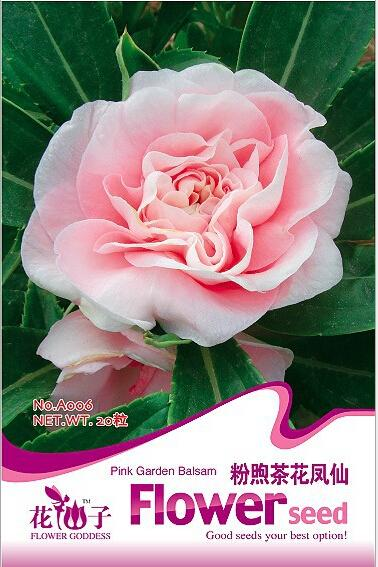 Pink Impatiens seeds, camellia seed impatiens, pink garden balsam,about 20 particles / pack(China (Mainland))