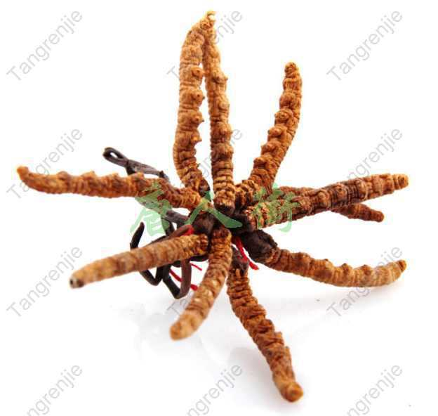 500G free shipping Cordyceps sinensis extract powder 40% potency/ cordyceps extract / chinese caterpillar fungus extract<br><br>Aliexpress