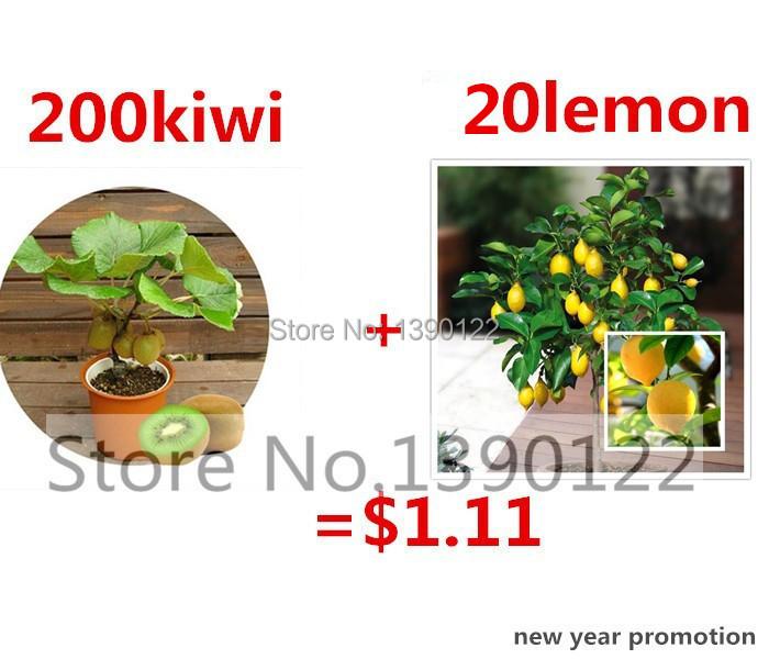 200 rare bonsai kiwi seeds send 20 bonsai lemon seeds for gift fruit seeds for DIY home garden planting new year only $1.11(China (Mainland))