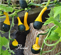 Bottle Gourd Seeds --- Different Varieties interesting and attractive Free Shipping(China (Mainland))