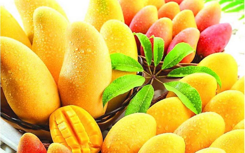 Acquista allingrosso Online pianta albero di mango da Grossisti pianta a...