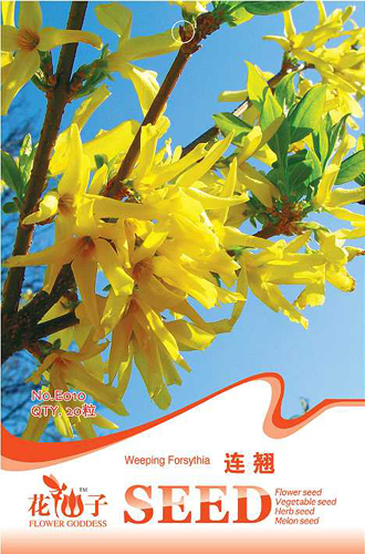 Buy 2 Get 1!(Can accumulate ) 1 Pack 20 Seeds Chinese Traditional Good Effect Herb Weeping Forsythia E010(China (Mainland))