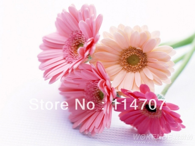 extral fee for shipping cost or for other product special requirement