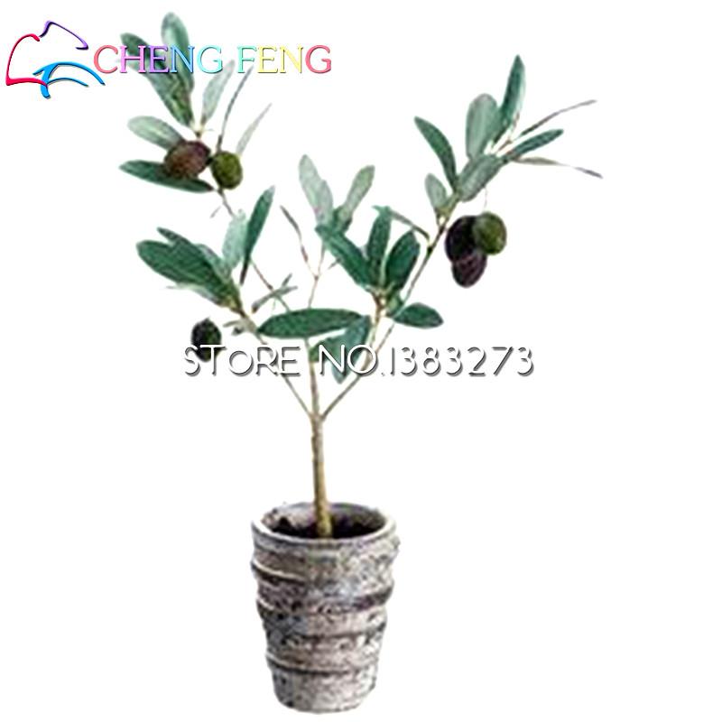 online kaufen gro handel olivenbaum aus china olivenbaum. Black Bedroom Furniture Sets. Home Design Ideas