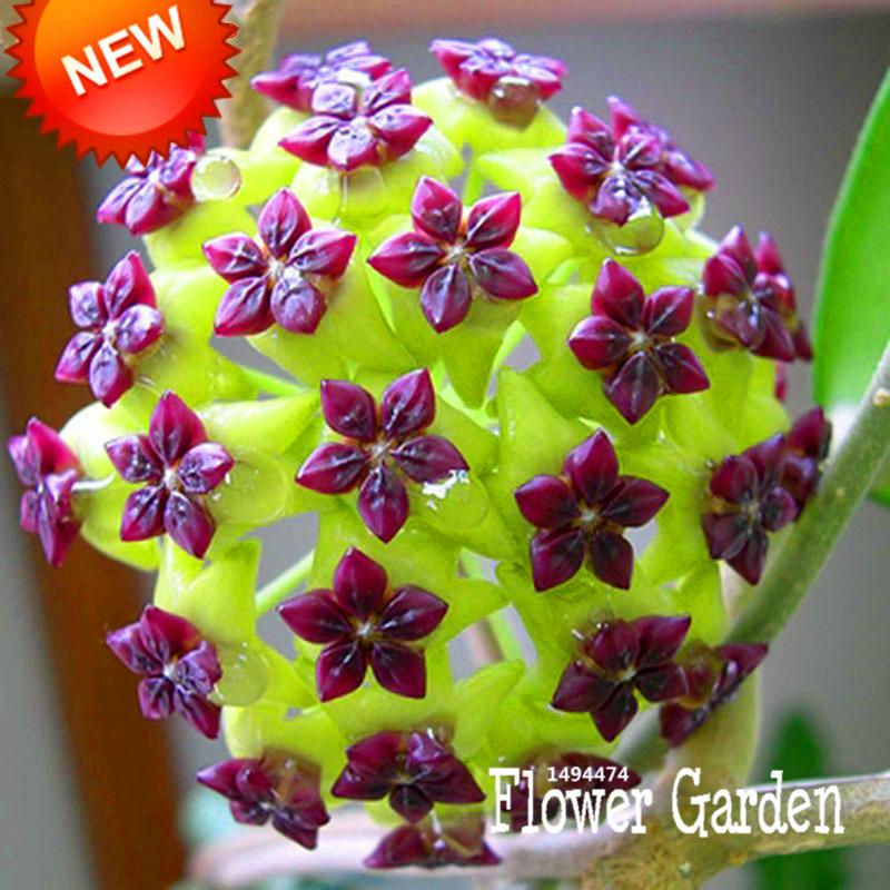 online kaufen gro handel mini topfblumen aus china mini. Black Bedroom Furniture Sets. Home Design Ideas