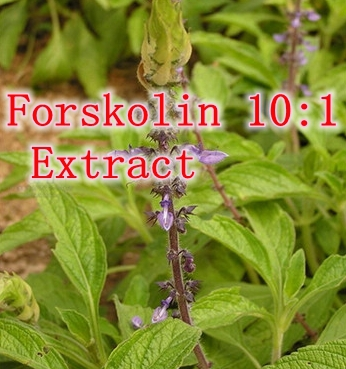 Гаджет  100pcs X Nature Forskolin 10:1 Extract Capsule Pure Coleus Forskohlii 350mg free shipping None Еда