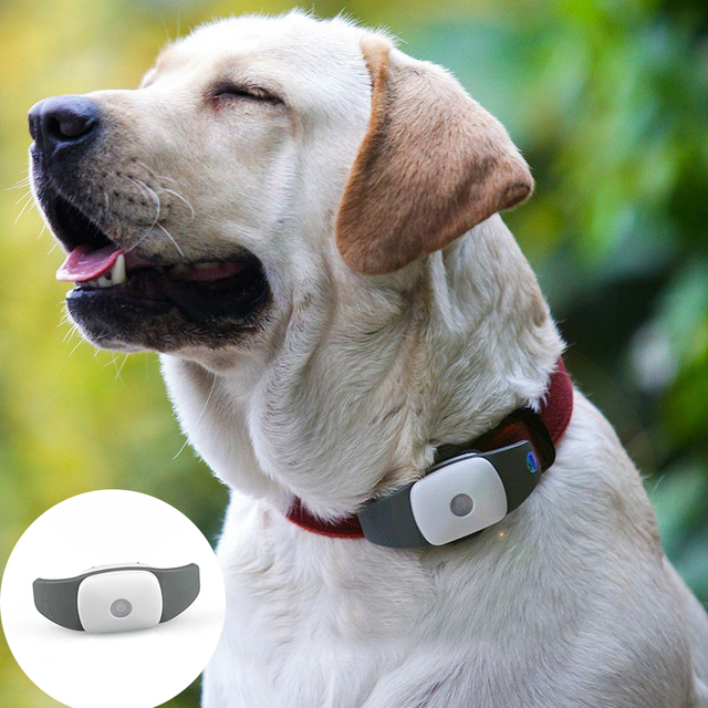 For Followit Waterproof GPS Tracker Tracking System Device via APP for Dog Pet Collar UK Plug PS044