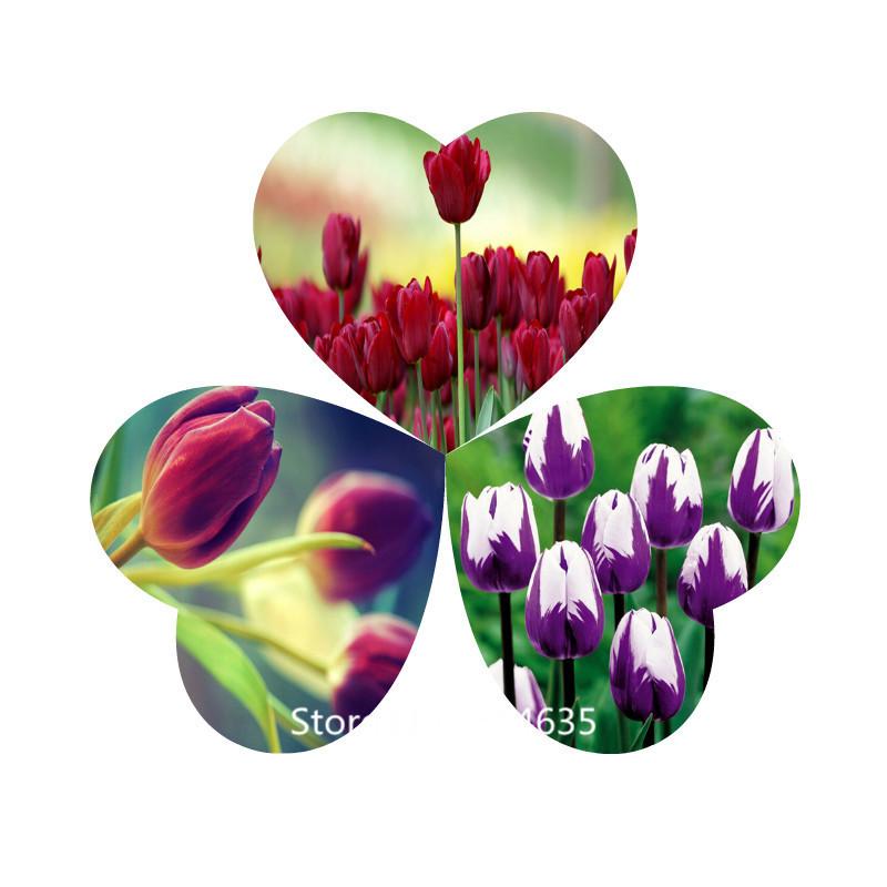 Garden Plant Wholesale authentic Tulip Species ball flower seeds rare plants, 100pcs Bonsai Seed(China (Mainland))
