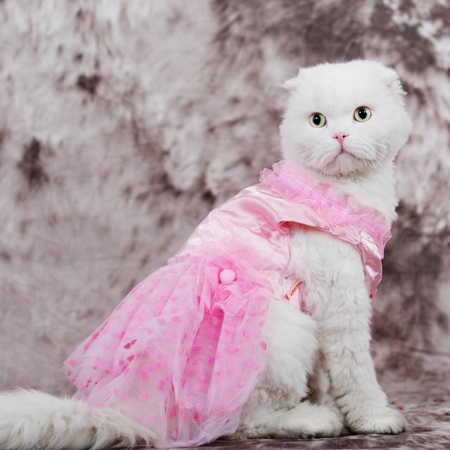 aliexpresscom buy high quality kitten sundress dress