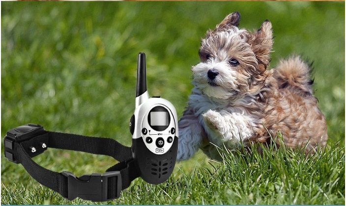 rechargeable and waterproof remote control dog training collar equipment for 1 dog within 300 meter range(China (Mainland))