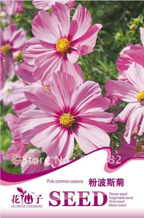 купить Карликовое дерево FLOWER GODDESS 3 * 50 A177 недорого