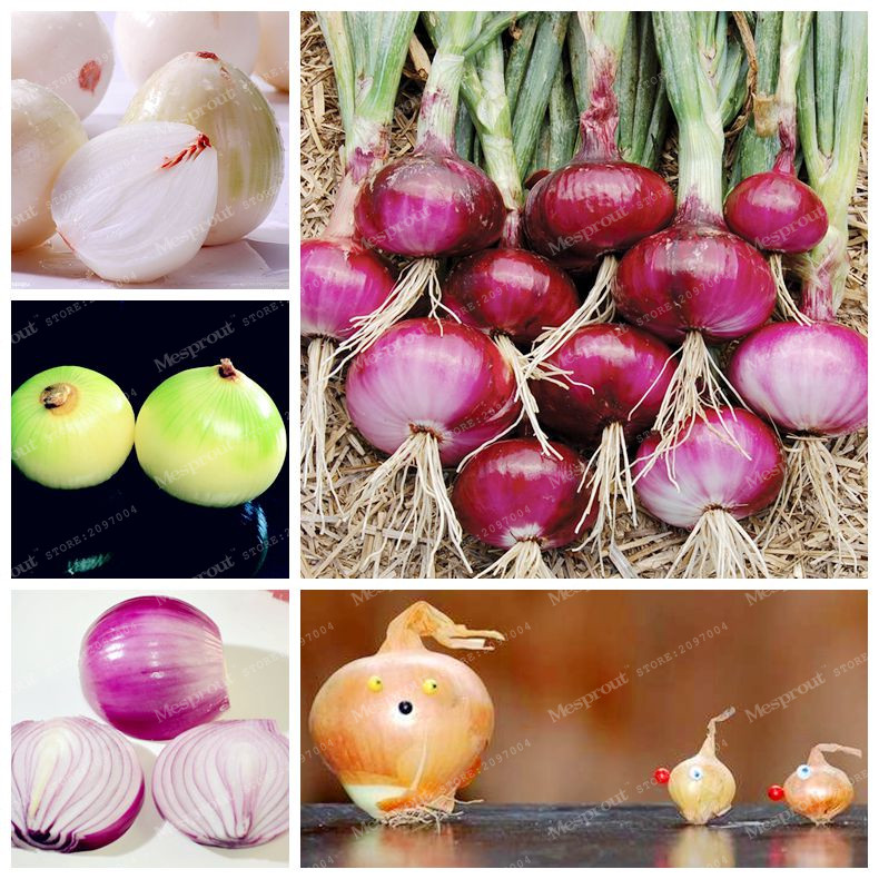 how to keep garden green onions fresh