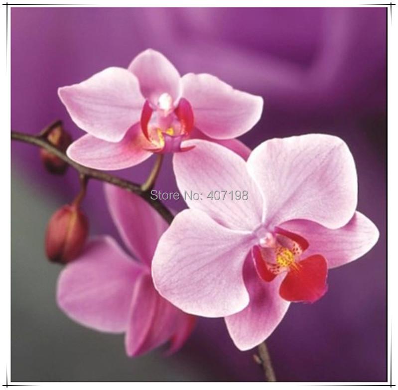 Handmade needlework diy diamond painting kit diamond embroidery plant full rhinestone Pink orchid cross stitch diamond painting(China (Mainland))