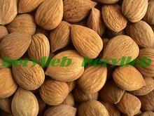 Free Shipping 1kg  Fresh Bitter Apricot Kernels (with coatings,Organic)(China (Mainland))