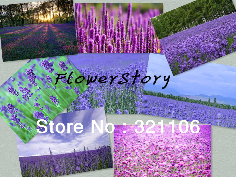 Free shipping, rare combinations of eight different varieties of lavender, floral vanilla seeds(China (Mainland))