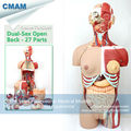 CMAM TORSO05 85cm 29 Parts Human Full Size Torso Model with Half Body Muscles Organs