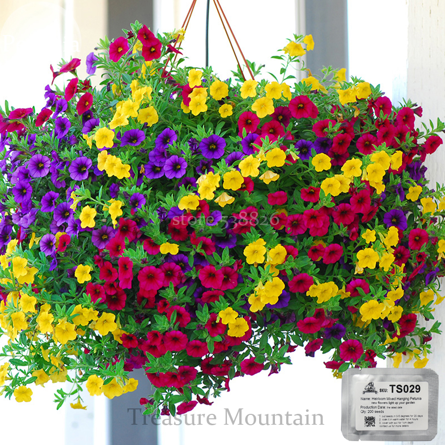 Heirloom Hanging Petunia Mixed Seeds, Professional Pack, 200 Seeds / Pack, Very Beautiful Garden Flowers Light Up Your Garden(China (Mainland))