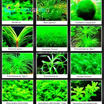 30 Pcs /bag Edible Mushroom Seeds Strains Geesteranus Seed Plants Diy Garden Interest Vegetable Seeds Succulent Plant Pot Bonsai