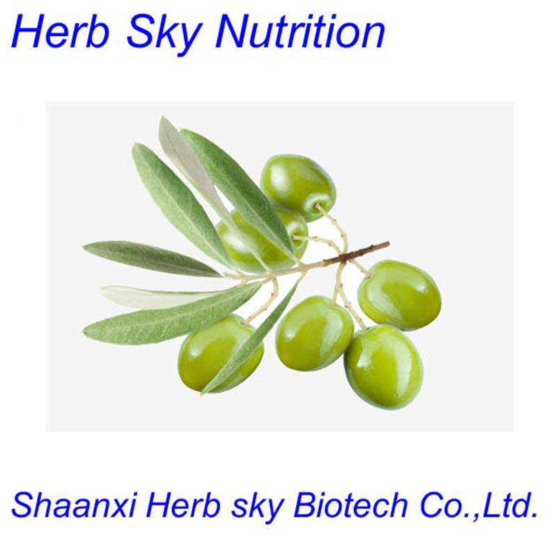 300g/lot High quality Herbal Extract Powder Olive Leaf Extract Oleuropein 20% free shipping by EMS<br><br>Aliexpress