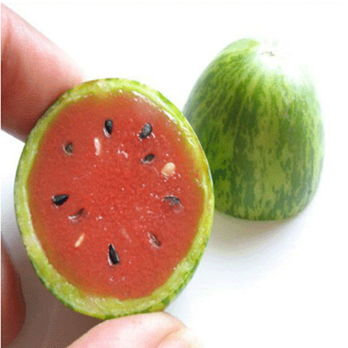 Hot selling 50pcs mini watermelon seeds,potted planting balcony,fruit and vegetable seed flesh red/yellow/green thumb watermelon(China (Mainland))