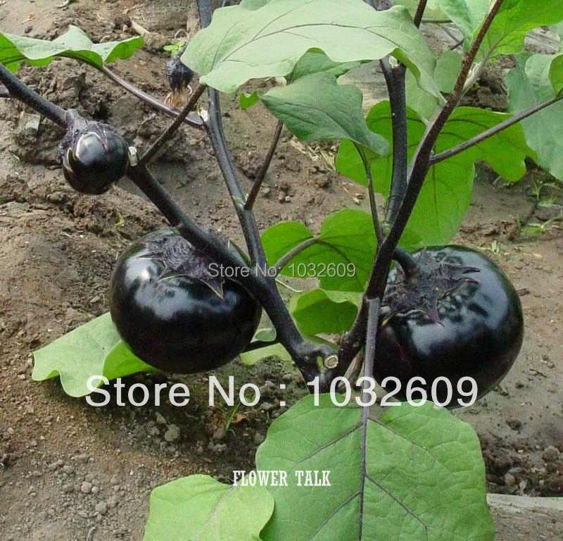 Buy Wholesale Garden Supplies 150pcs