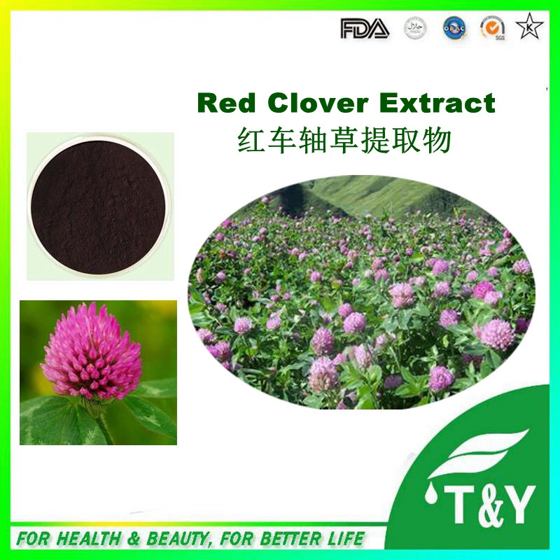 China Red Clover Extract / Red Clover P.E. Total Isoflavones 600g