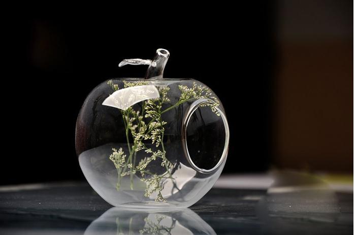 Piante Grasse Vetro : Piante grasse nel vetro idee per il design della casa