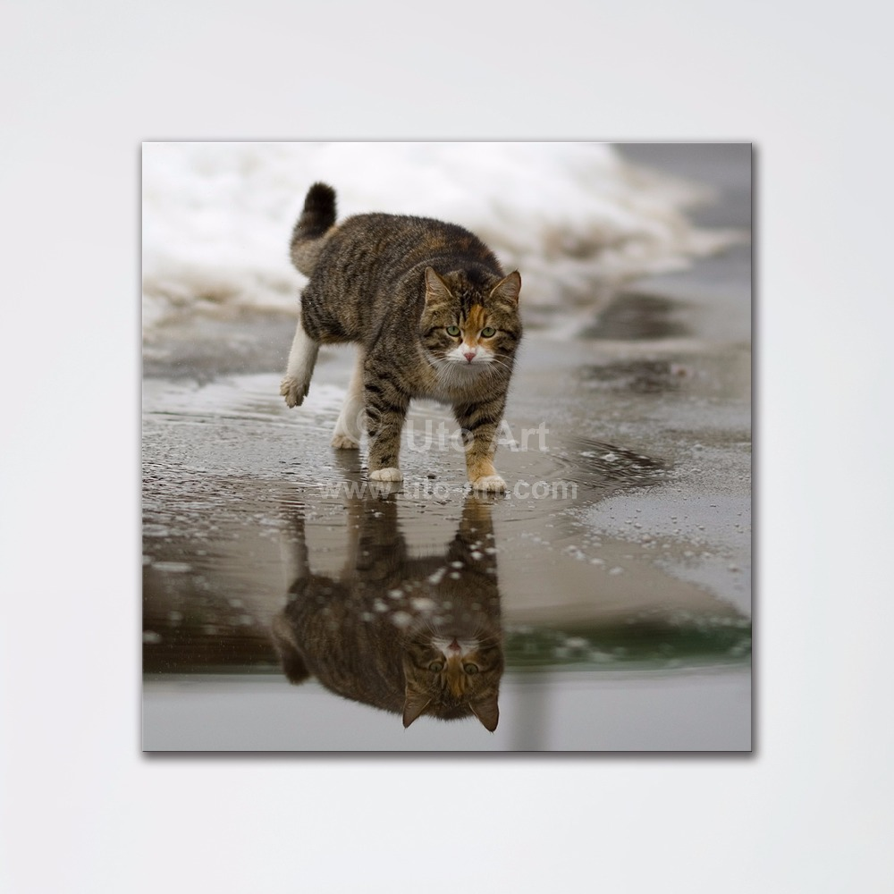 New Modern Home Decoration Pieces Wall Art Painting Custom Digital Picture Prints Cat Animal Square Living Room Painting for Kid(China (Mainland))