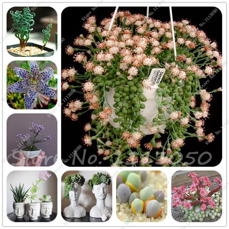 100 Pcs Mixed Succulent Seeds Bonsai Cactus Plant of Home Garden Decoration Flowers Seeds Rare Sempervivum orquideas para planta(China (Mainland))