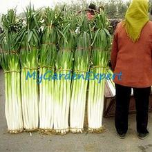 Buy 100pcs Zhangqiu Giant Chinese Green Onion Seeds Vegetable Seeds Home Garden Bonsai Plant Chinese Vegetable Seed Free for $1.07 in AliExpress store