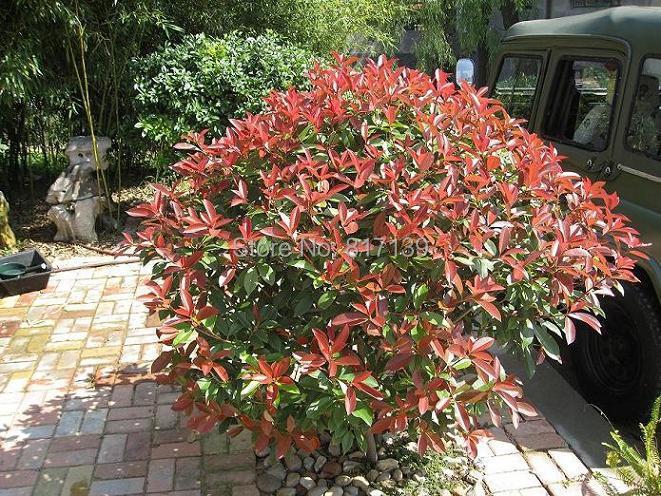 buy new home garden plant 30 seeds. Black Bedroom Furniture Sets. Home Design Ideas