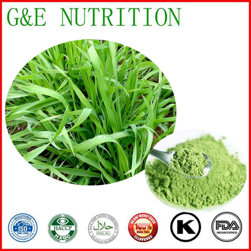 900g First grad Barley Grass/ Barley Plants/ hordeum jubatum Extract with free shipping, 10:1<br><br>Aliexpress