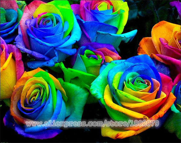 400 / bag rare rainbow rose seeds, rare species of roses, romantic flowers, send beautiful gifts free shipping(China (Mainland))